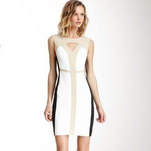 Sandra Darren Colorblock Sheath Dress